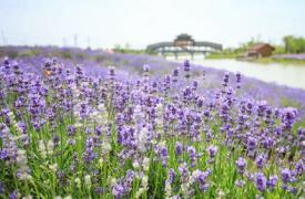 六月,南京精彩休闲农业创意活动有这些